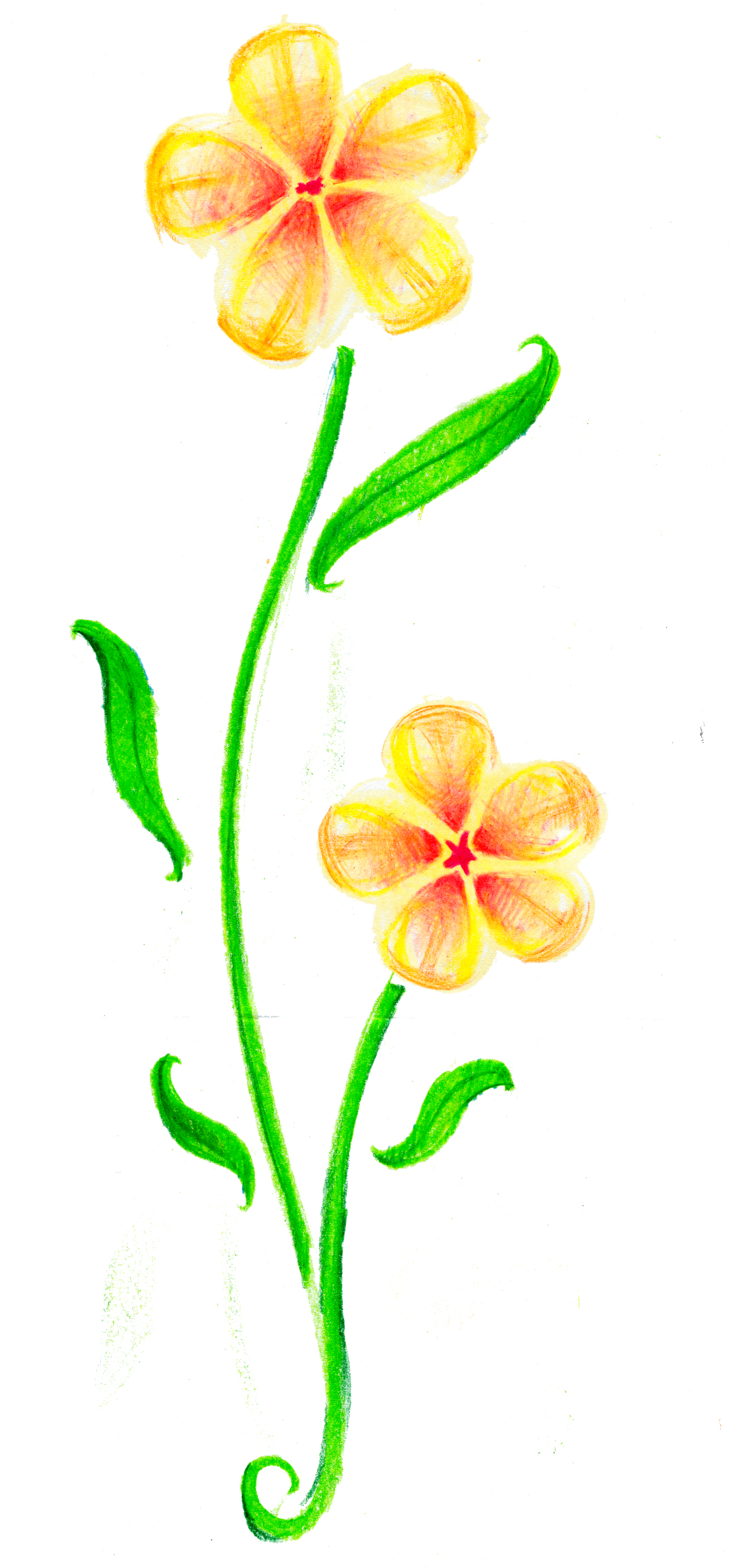 Flower Drawing Kidzera