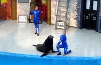 Sea Lion Show by: creativegirlever