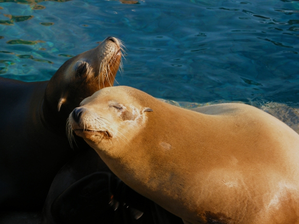 Seals photograph by: Dogzrule106